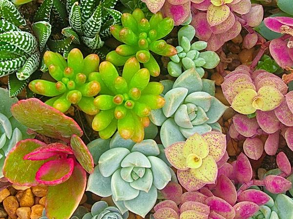 Miniature%20succulent%20plants_edited.pn