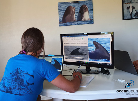 How do we know which whales we see?