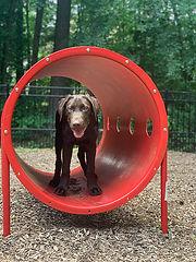 dog park play tube.jpg