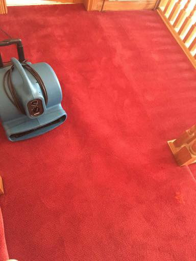 Cleaned Carpet Drying 2