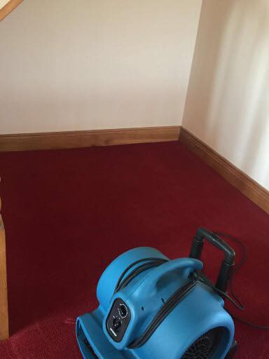 Cleaned Carpet Drying