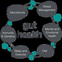 Gut-health-circle.png