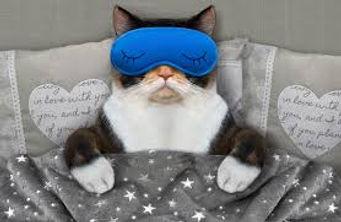 SLEEP CAT.jpg