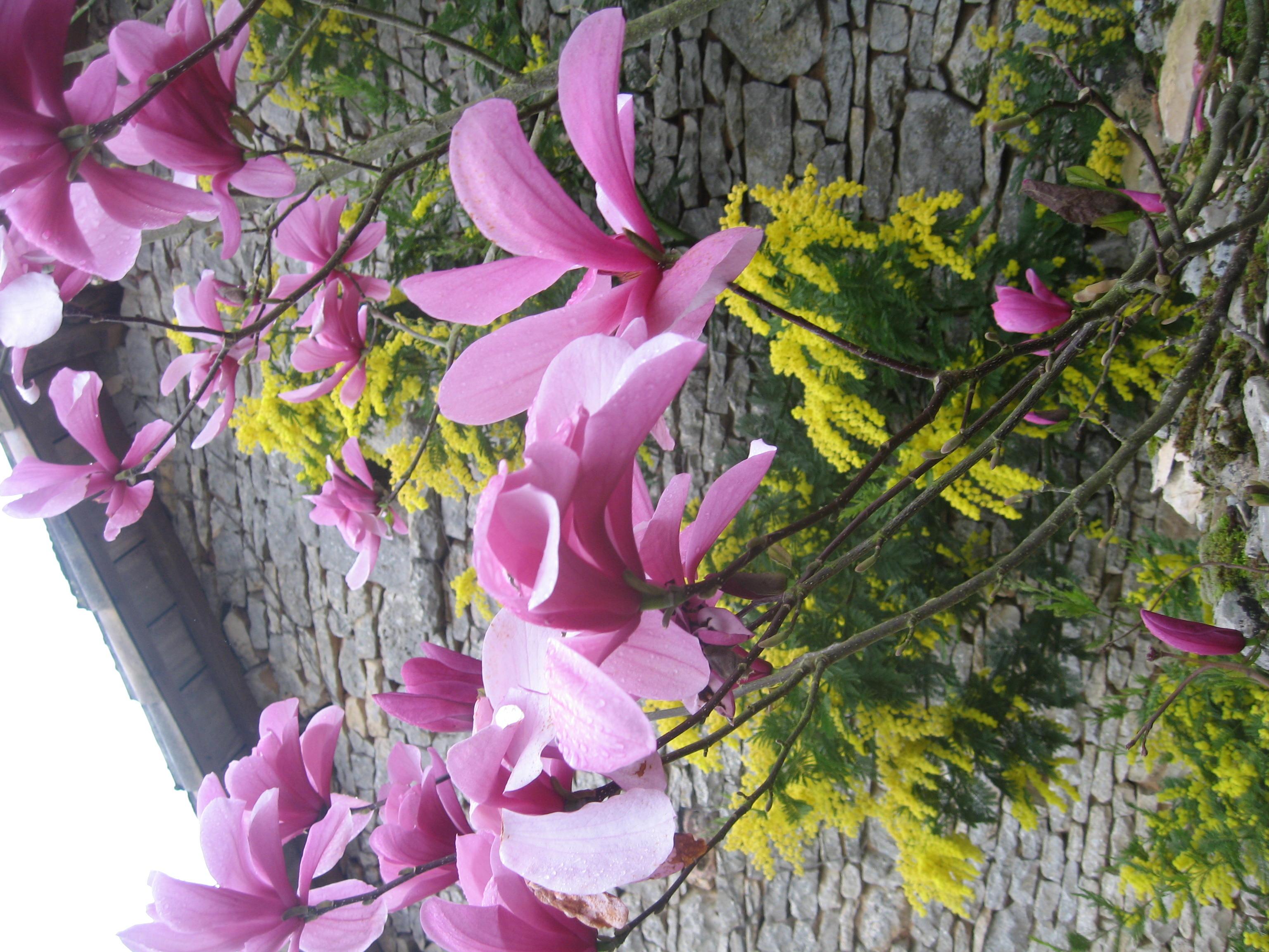 printemps159
