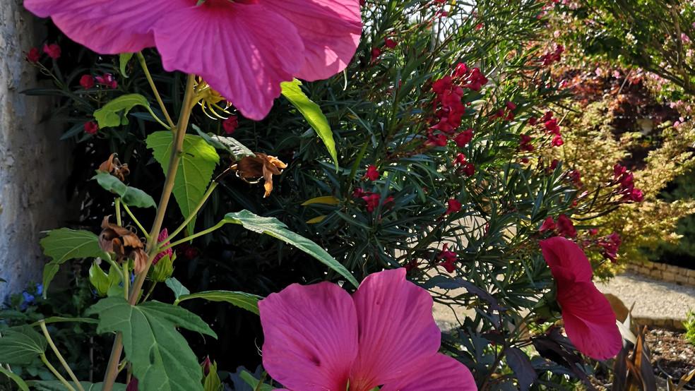 63-hibiscus.jpg