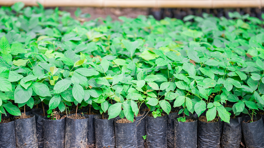 carbon offset tree planting program