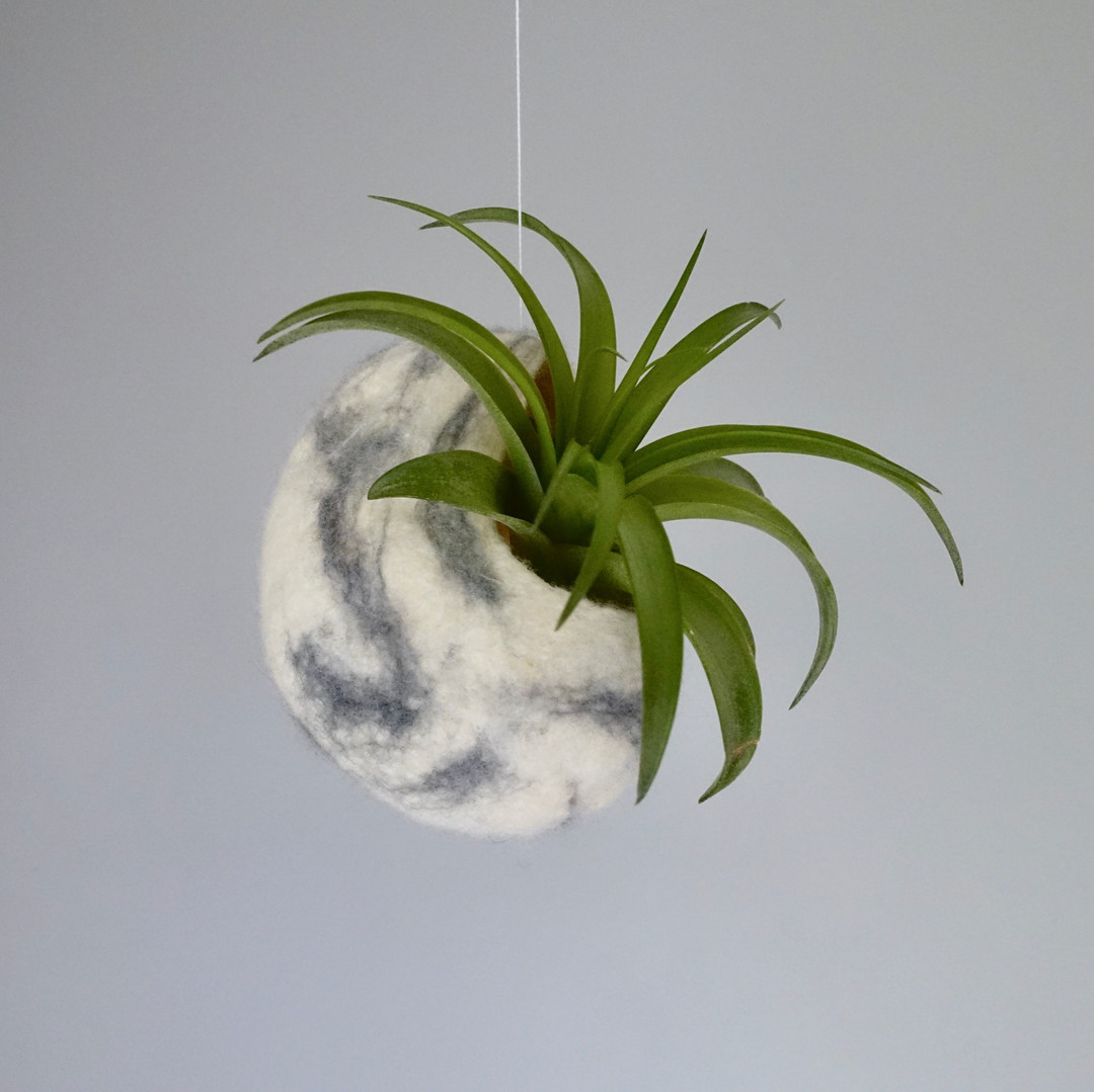 Floating Air Plant Pod