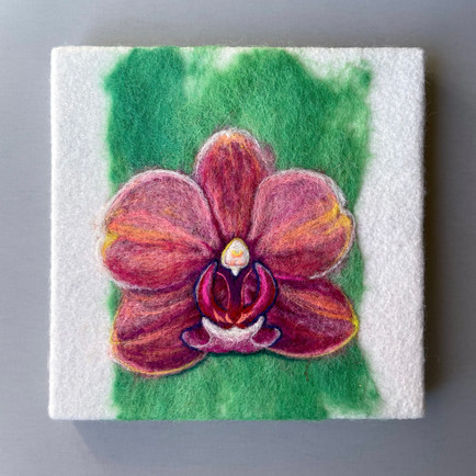 Orchid: Unabashed No 4