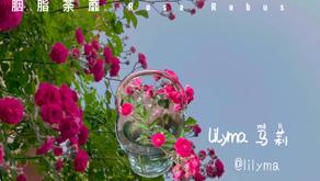 情绪与表达 Emotions and Expression Part 20:胭脂荼蘼 I love ROSA RUBUS