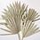 Thumbnail: Dried Sun Palm