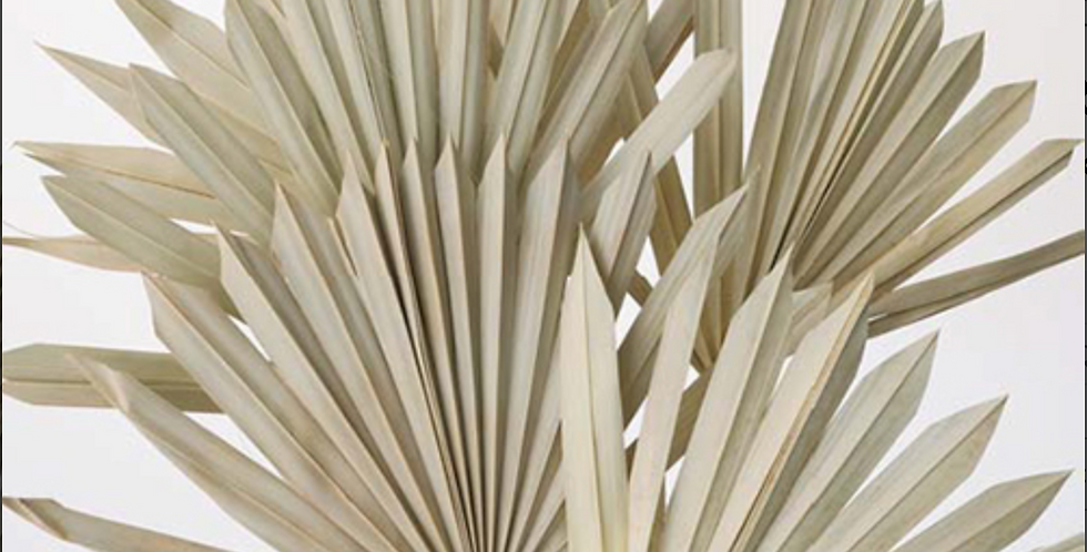 Dried Sun Palm