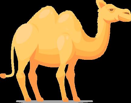 верблюд в Зоопарке в Иркутске