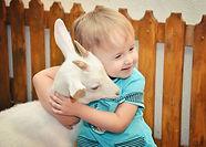 Показательное кормление коз в Иркутском