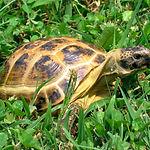 черепаха1.jpg