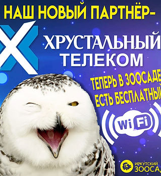 WiFi в зоосаде