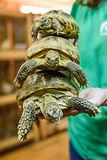 черепаха2.jpg