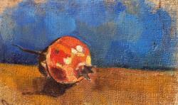 Melograno- Pomegranate