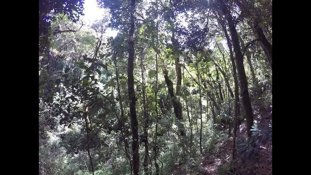 Caminata Sector Volcán Barva - Pico Inglés