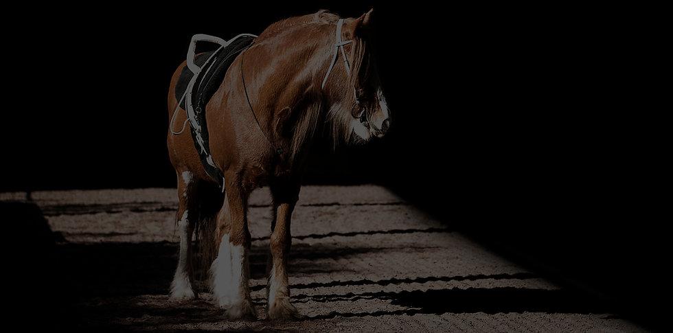 Our Horses Website.jpg