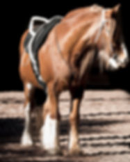 Website Image - Our Horses.jpg