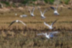 La ALBUFERA DE VALENCIA - les rizières et la réserve d'oiseaux