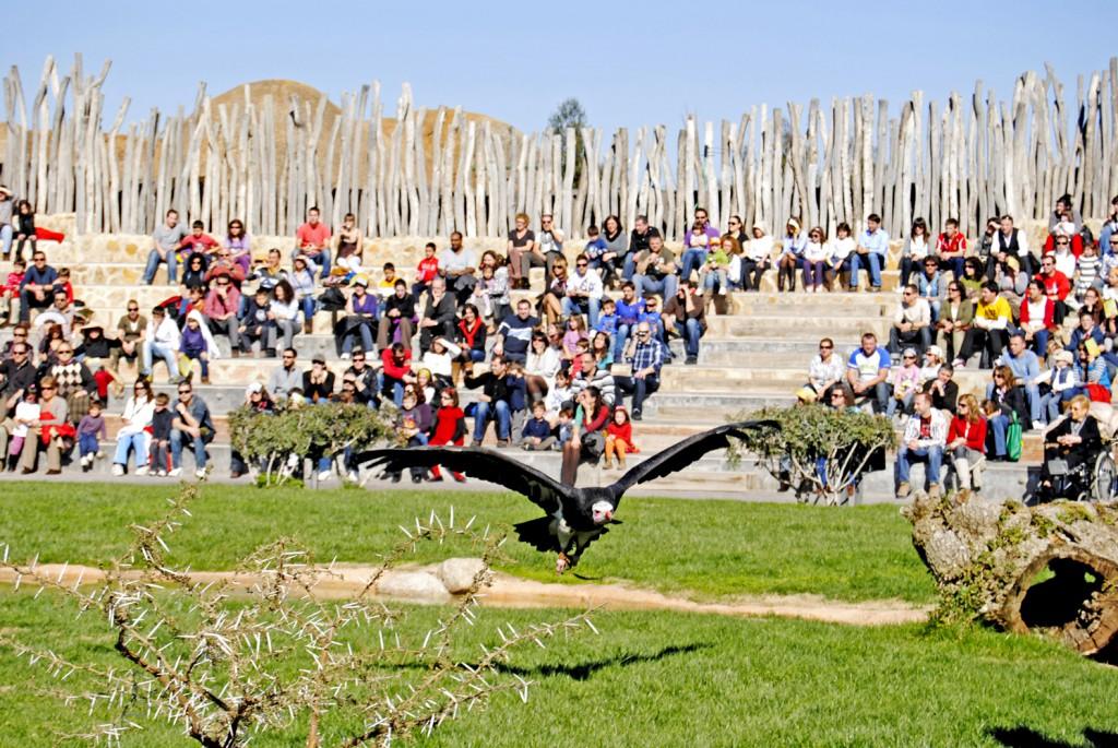 Bioparc-Valencia-exhibición-educativa-de-aves-y-mamíferos-1024x685