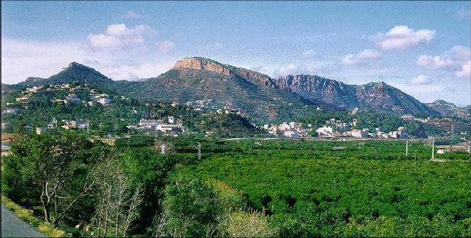 """La """"huerta"""" en premier plan (ici les orangers) et au fond la sierra Calderona"""