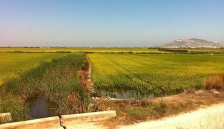 La ALBUFERA DE VALENCIA - les rizières