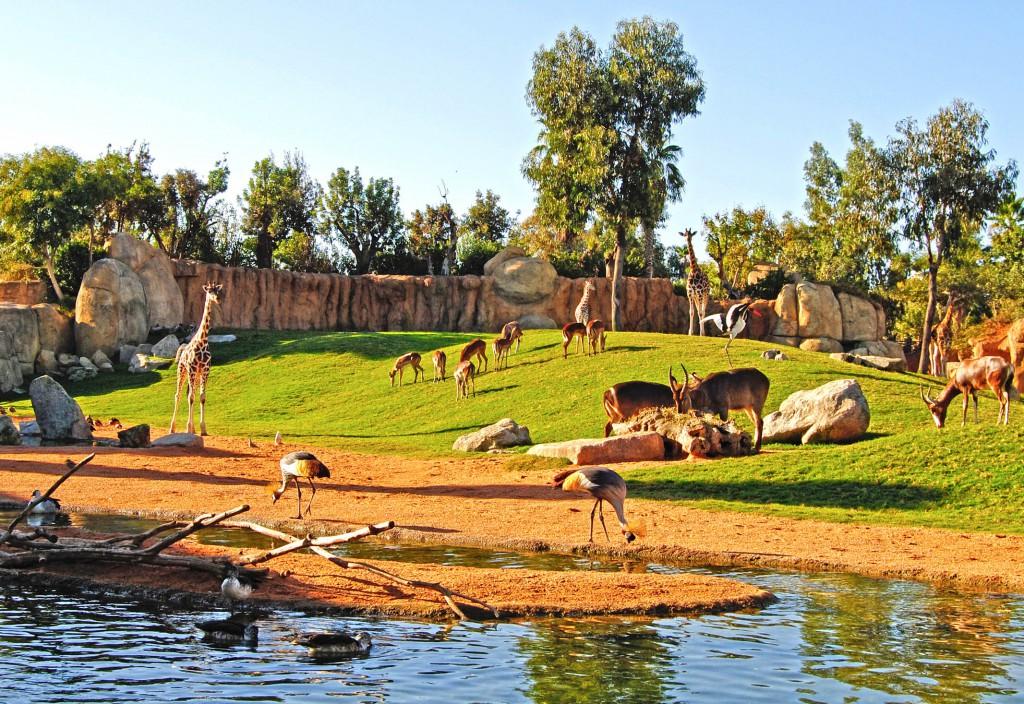 Sabana-africana-BioparcValencia-Octubre-2011-1024x704