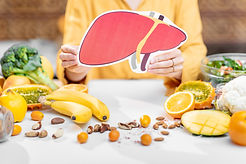 Holding human liver model with variety o