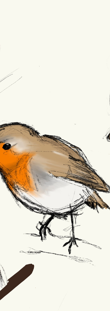 Freehand Illustration of Robins