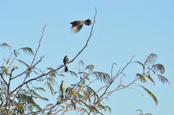 Templeton On Murray Birdlife
