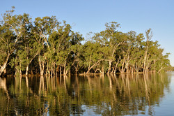 Templeton On Murray River in Flood