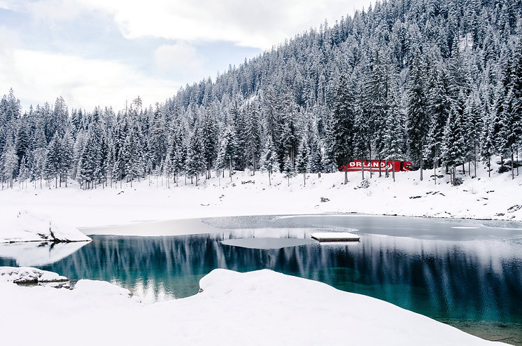 vinter skog med 1 bil.jpg