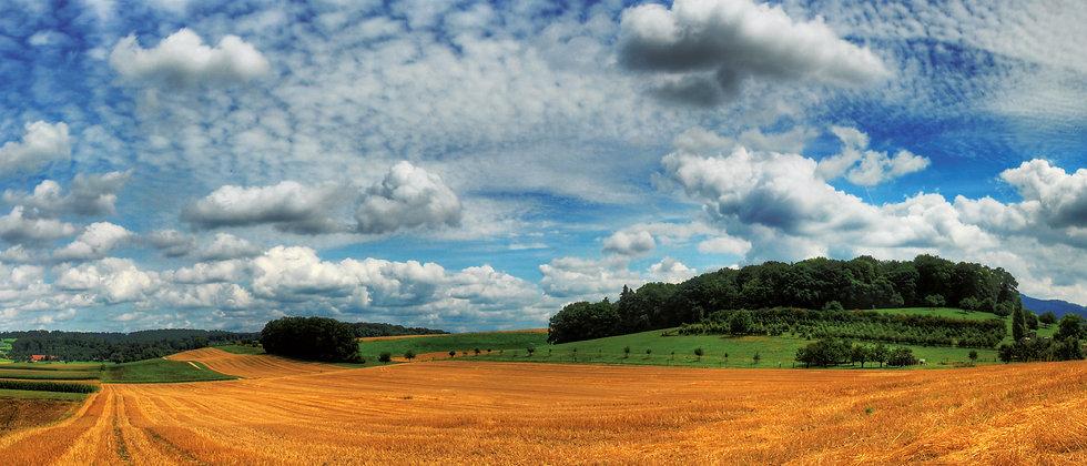 Panoramapostkarte Weizenfeld