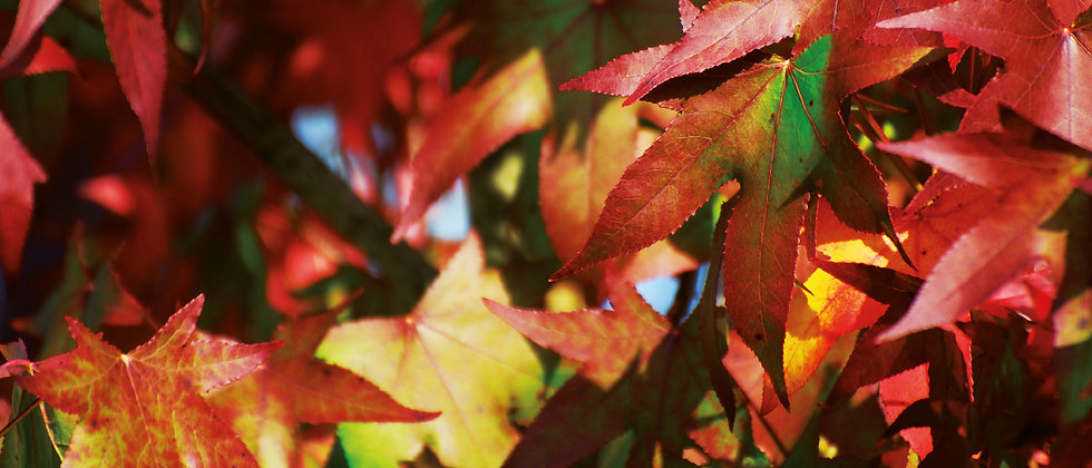 Panoramapostkarte Blätter