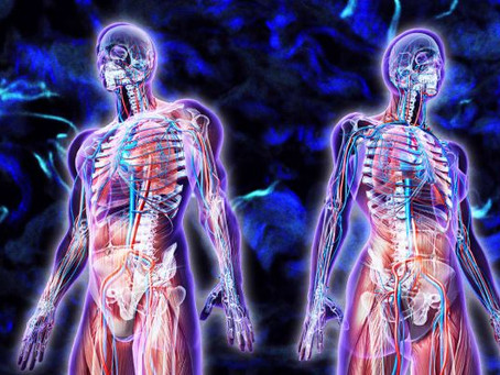 2018 and Researchers Find a New Organ in the Human Body?