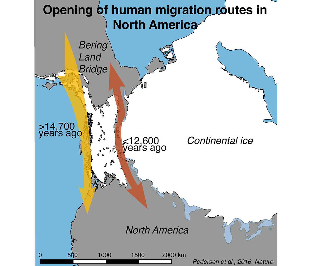 Иллюстрация к статье «Postglacial viability and colonization in North America's ice-free corridor». Nature, 10.08.2016.