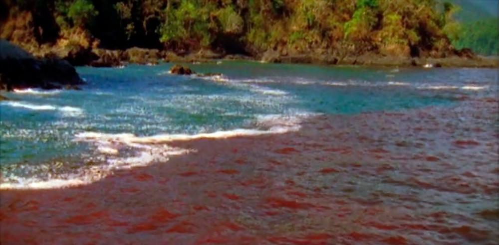Красный прилив у берегов Флориды. Кадр из фильма о красных приливах. U.S. Integrated Ocean Observing System.