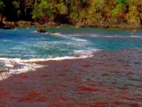 Красные приливы и шаманское зрение