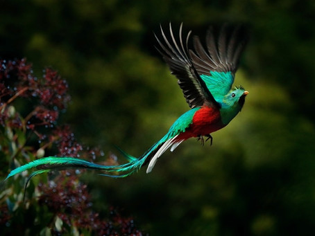 Мифы народов Майя: Как птицы правителя выбирали