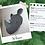 Thumbnail: Rhino