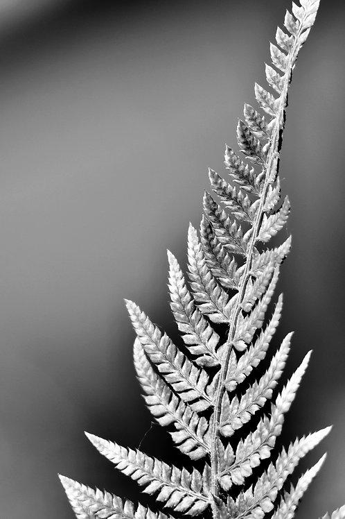 Photo Noir & Blanc 90 x 60 série limitée à 57 exempla