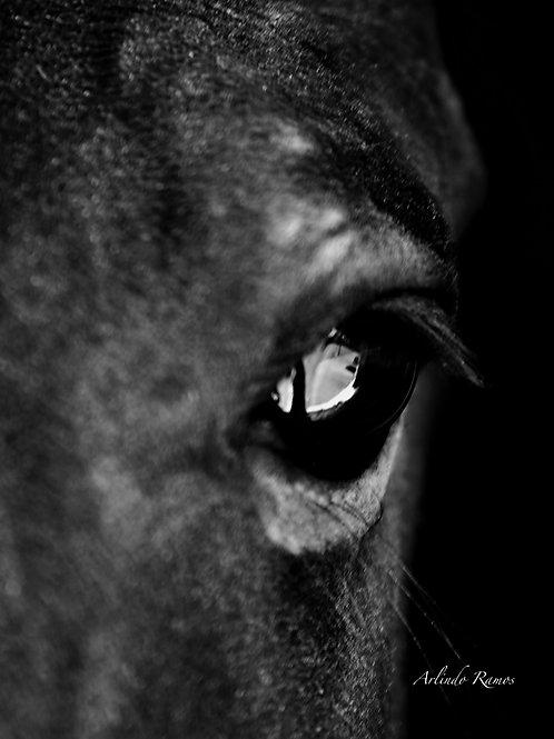 Photo Noir et Blanc support Alu Dibond Dimensions 90 x 60 cm