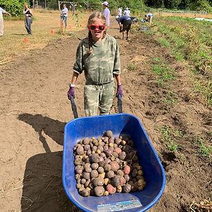 Girl holding a wheel-barrow full of potatoes.