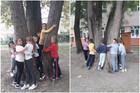 Драго наше дрво