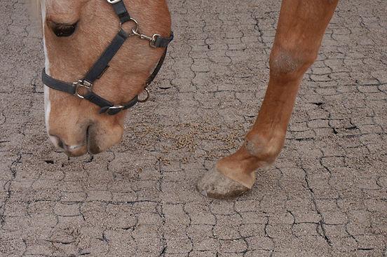 Runfloor Horses - Soil Consolidation Grids