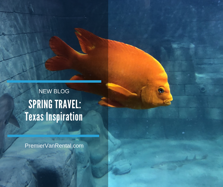 Spring travel in Texas