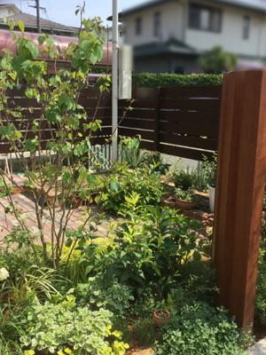 お庭の植物