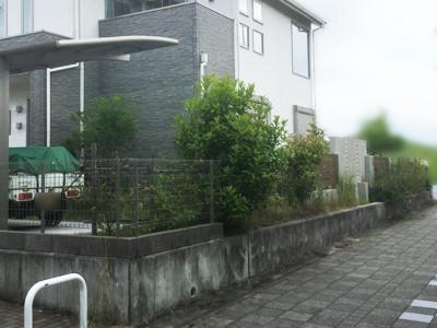 フェンス工事前の生垣